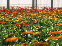 B-Fresh Floral Nurseries