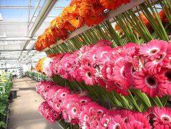 B-Fresh Floral